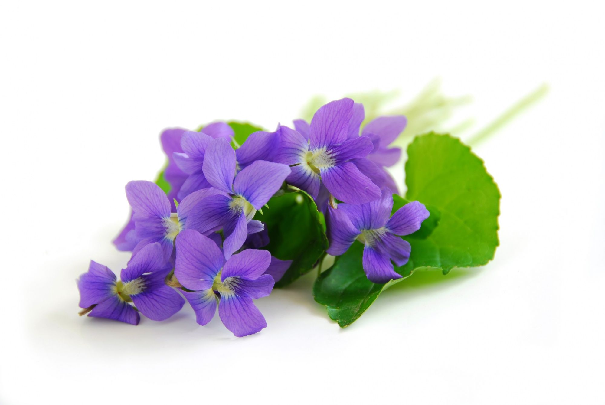 """flowers -    ♥ღ_______/)_♥ღ_____./¯""""""""""""/') ♥ღ                ♥ღ ¯¯¯¯¯¯¯¯¯♥ღ\)¯¯¯¯¯'\_""""""""""""""""\)♥ღ ♥ Anmary ♥ (¯`✻´¯) `*.¸.*✻ღϠ₡ღ¸.✻´´¯`✻.¸¸.Ƹ̴Ӂ̴Ʒ.. ❀❁✿♡༺♥༻༺♥༻♡❀❁✿♡༺♥༻༺♥༻"""
