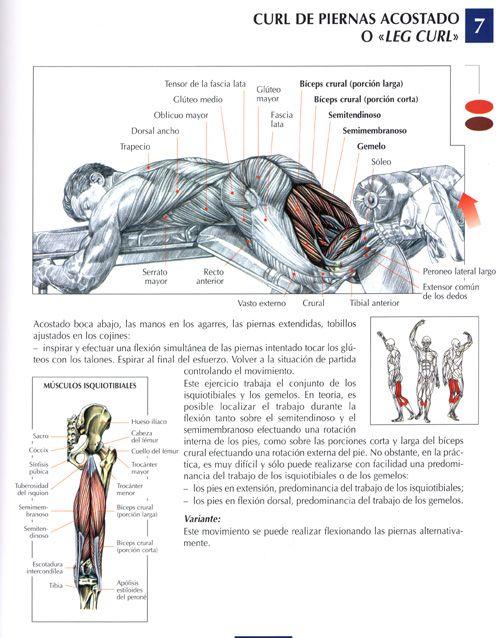 Ejercicios Piernas Fotos Musculacion Net Ejercicios Para Piernas Ejercicios Ejercicios Musculares