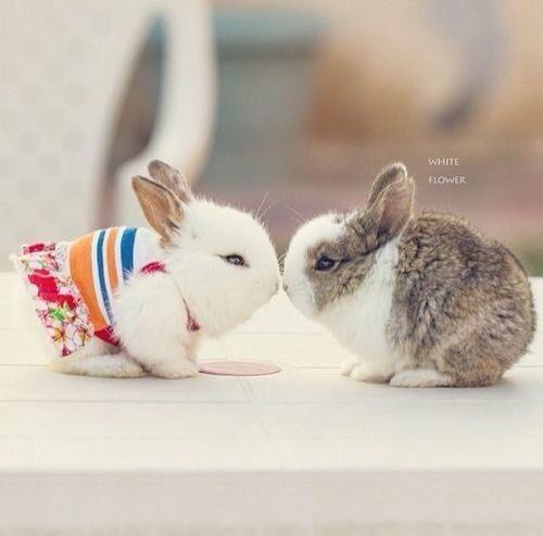 Omg Are They Real They Re Cute I Wanna Bunny Now 귀여운 아기 동물 아기 동물 귀여운 동물 사진