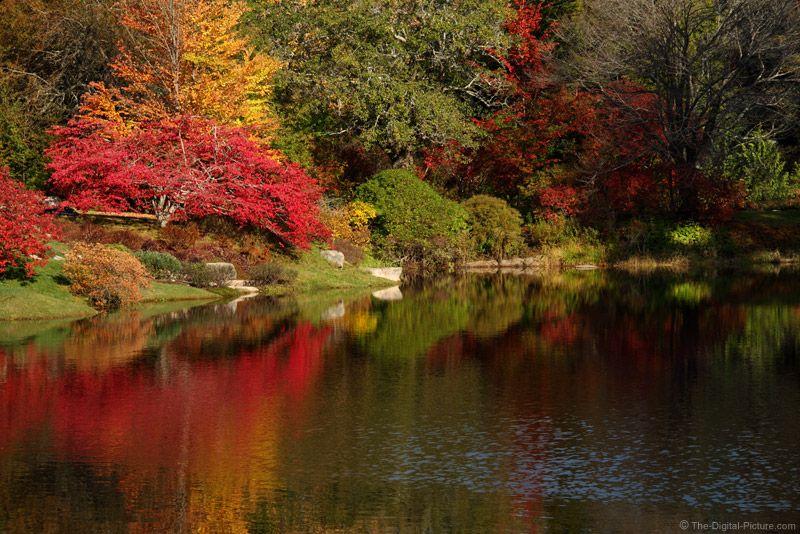 Asticou Azalea Gardens in the Fall