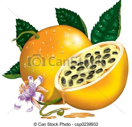 Drawings Of Passion Fruit High Resolution Image Made By Photoshop And Csp0239933 Search Clipart Illus Fruits Drawing Fruit Illustration Passion Fruit