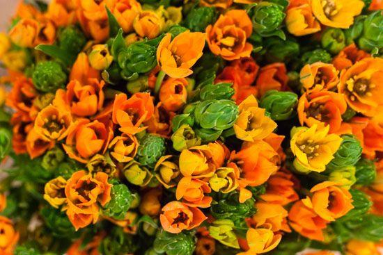 orange chincherinchee ornithogalum at new covent garden flower market january 2015