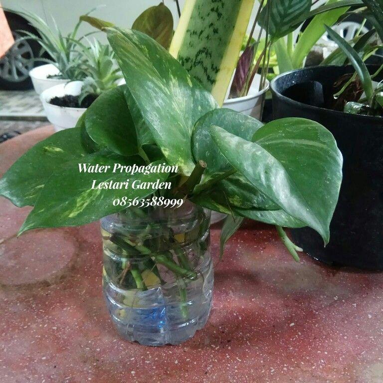 Pin Oleh Dharwiyanti Padmo Rusdi Di Here Are Some Kinds Of Indonesian Orchid Anggrek