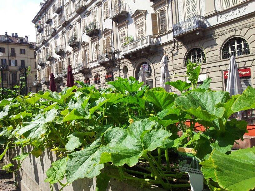 orto #urbano #Torino in piazza Emanuele Filiberto | Urban, Guida ...