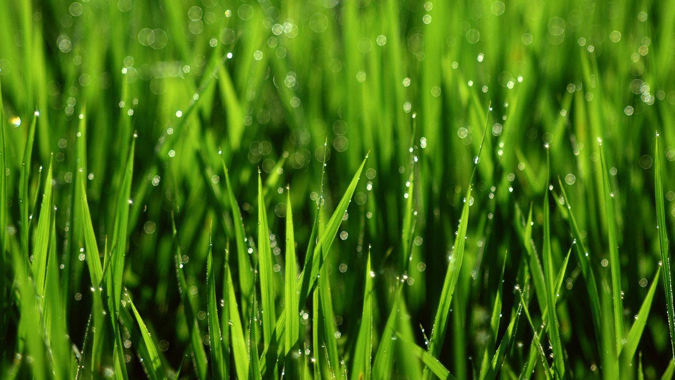 green plant desktop -#main