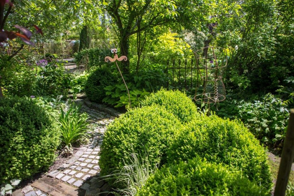 Buchsbäume im Garten - Pflege