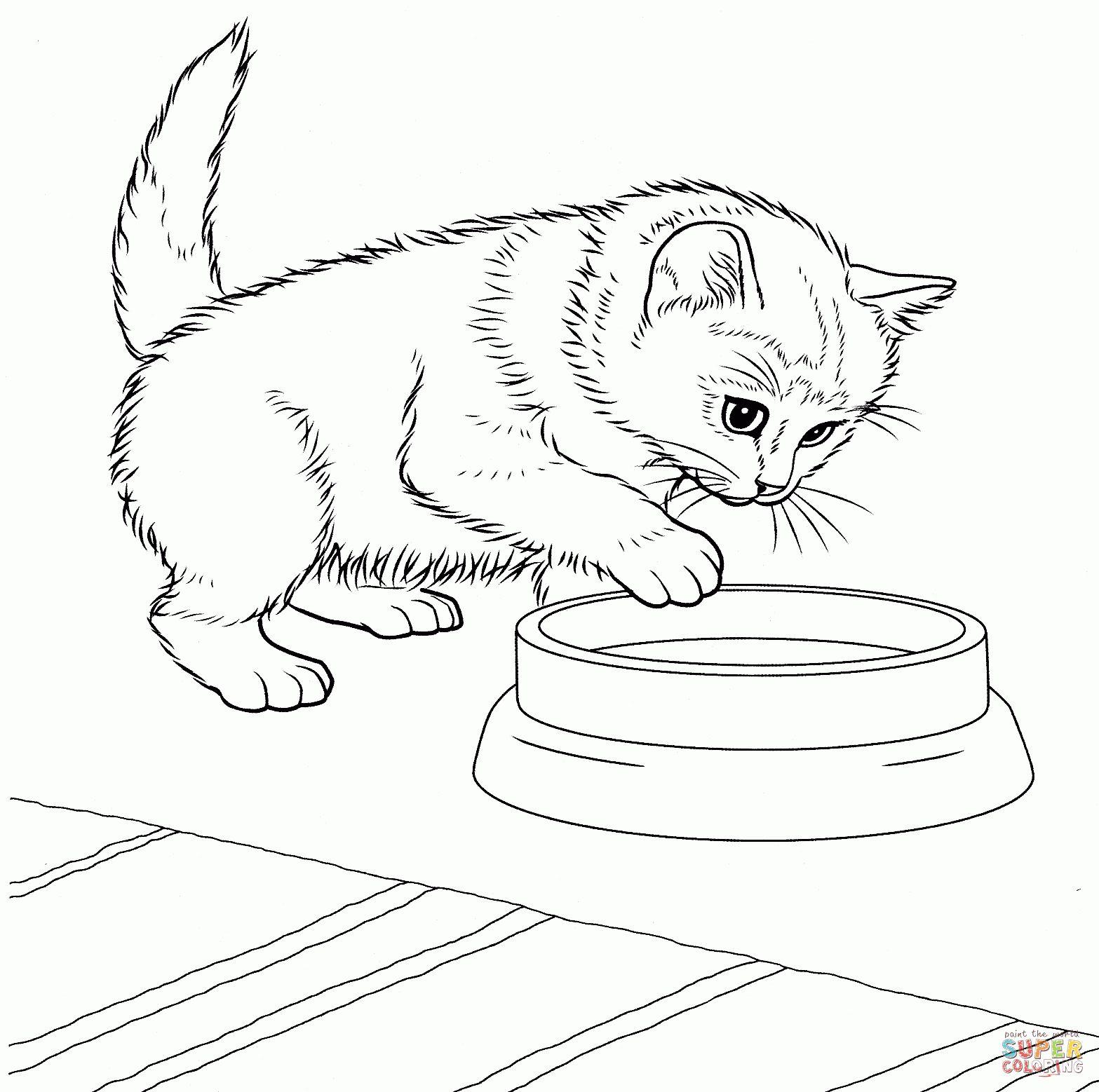30 Nuova Cuccioli Di Gatto Da Colorare Disegno Di Animali Gatti Disegni Di Gatti