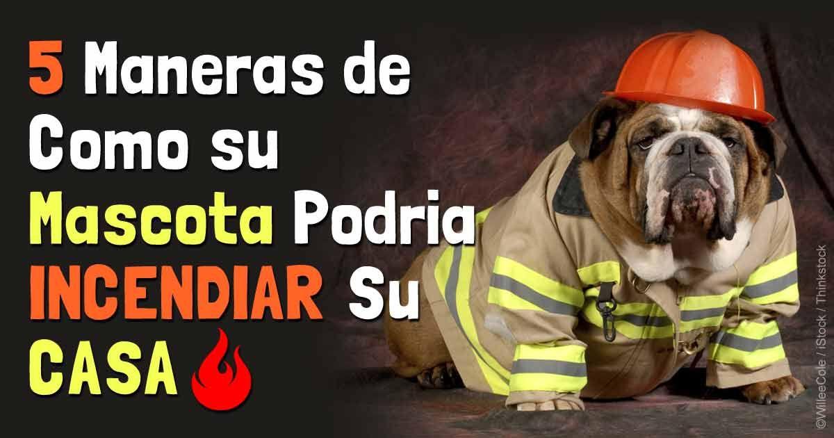 Establecer un plan de rescate contra un incendio podría salvar la vida de su mascota—estas son algunas cosas que debe recordar. http://mascotas.mercola.com/sitios/mascotas/archivo/2014/07/29/plan-de-escape-de-incendios-para-mascotas.aspx
