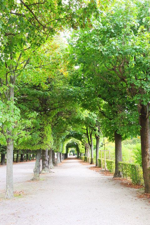 Tree Tunnel, Schönbrunn Gardens Vienna, a reason to plant trees a long time ago, so they are beautiful now.