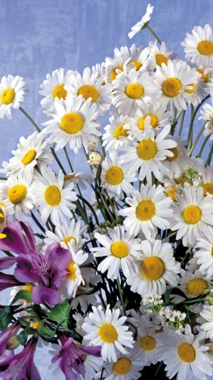 Download Wallpaper 720x1280 Daisies, Lilies, Flowers, Bouquet ...