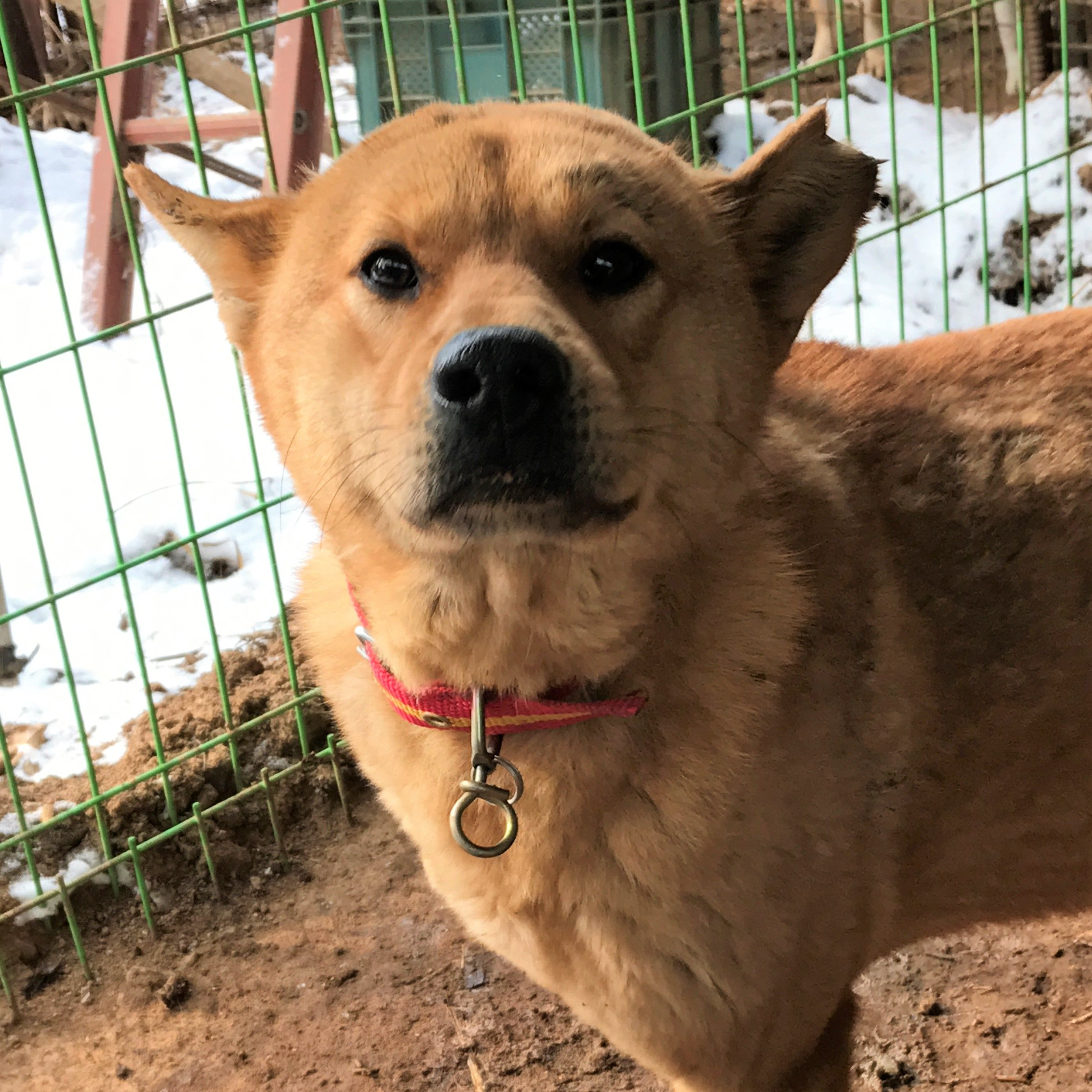 Dogs Available for Adoption – KOREAN DOGS Woof
