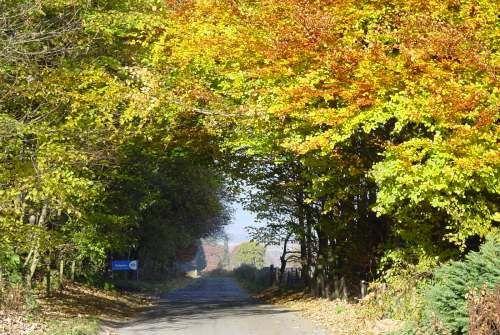 Dalguise Photo Album / Dalguise 7.jpg - our road