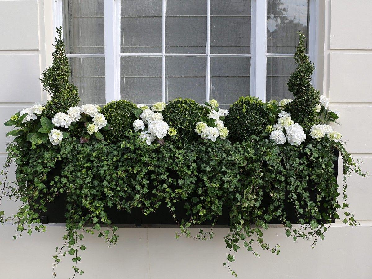 Luxury Large Window Box In Belgravia Window Box Plants Window