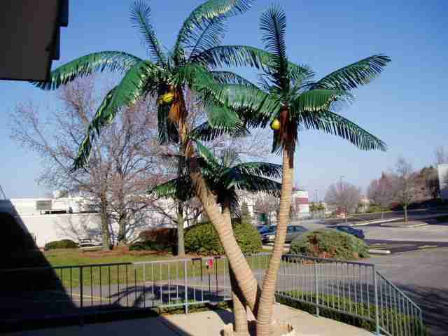Own Artificial Palm Tree!