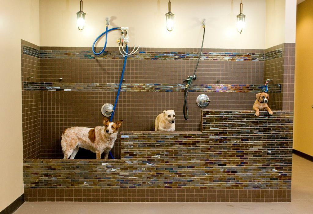 Virtual Tour Mascotas Peluqueria Canina Perrito