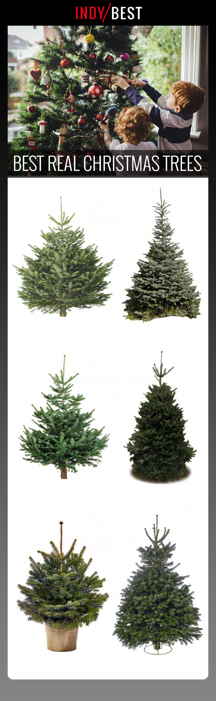 11 best real Christmas trees that have the festive smell