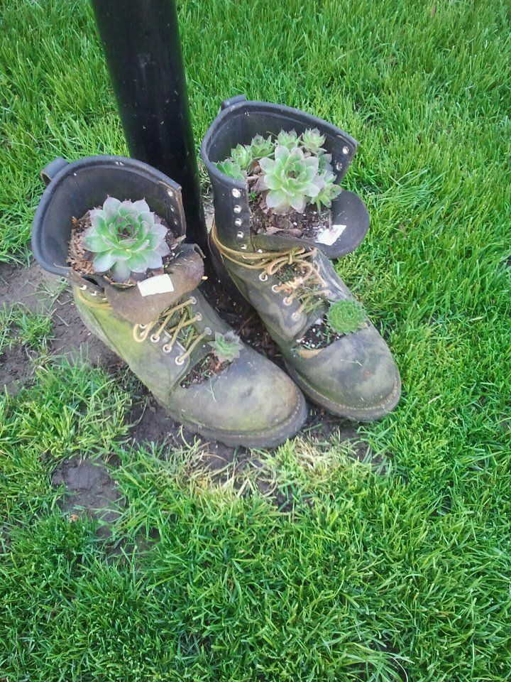 Old work boots with succulents planted in them