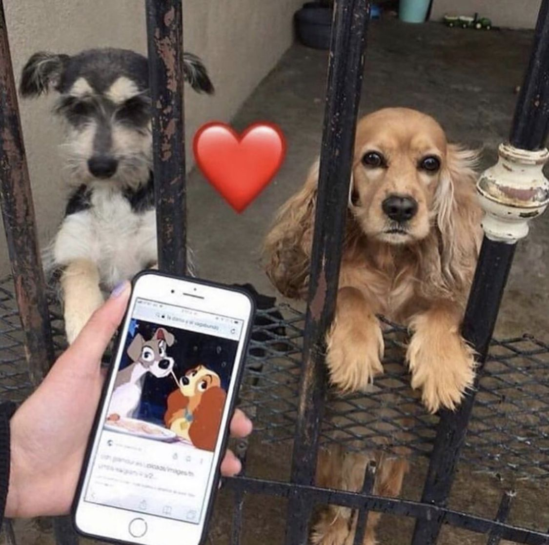 cute dogs, lady and the tramp, disney, animals, disney