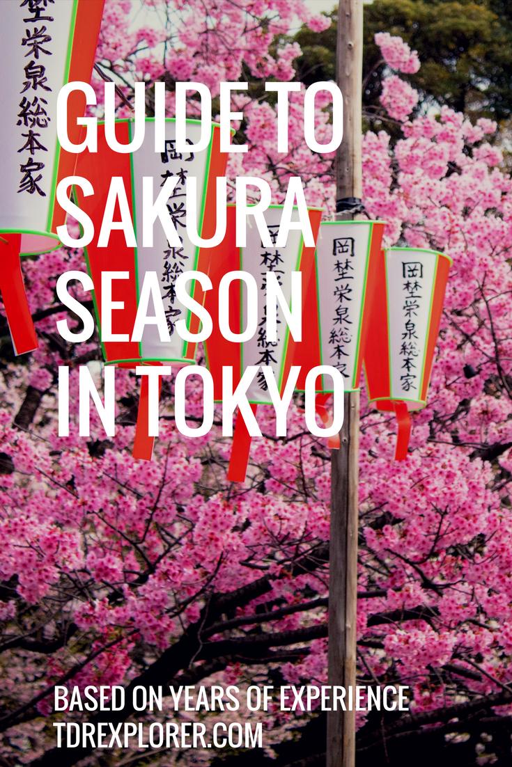 Tokyo Cherry Blossom Guide Tips Tokyo Cherry Tokyo Japan Travel