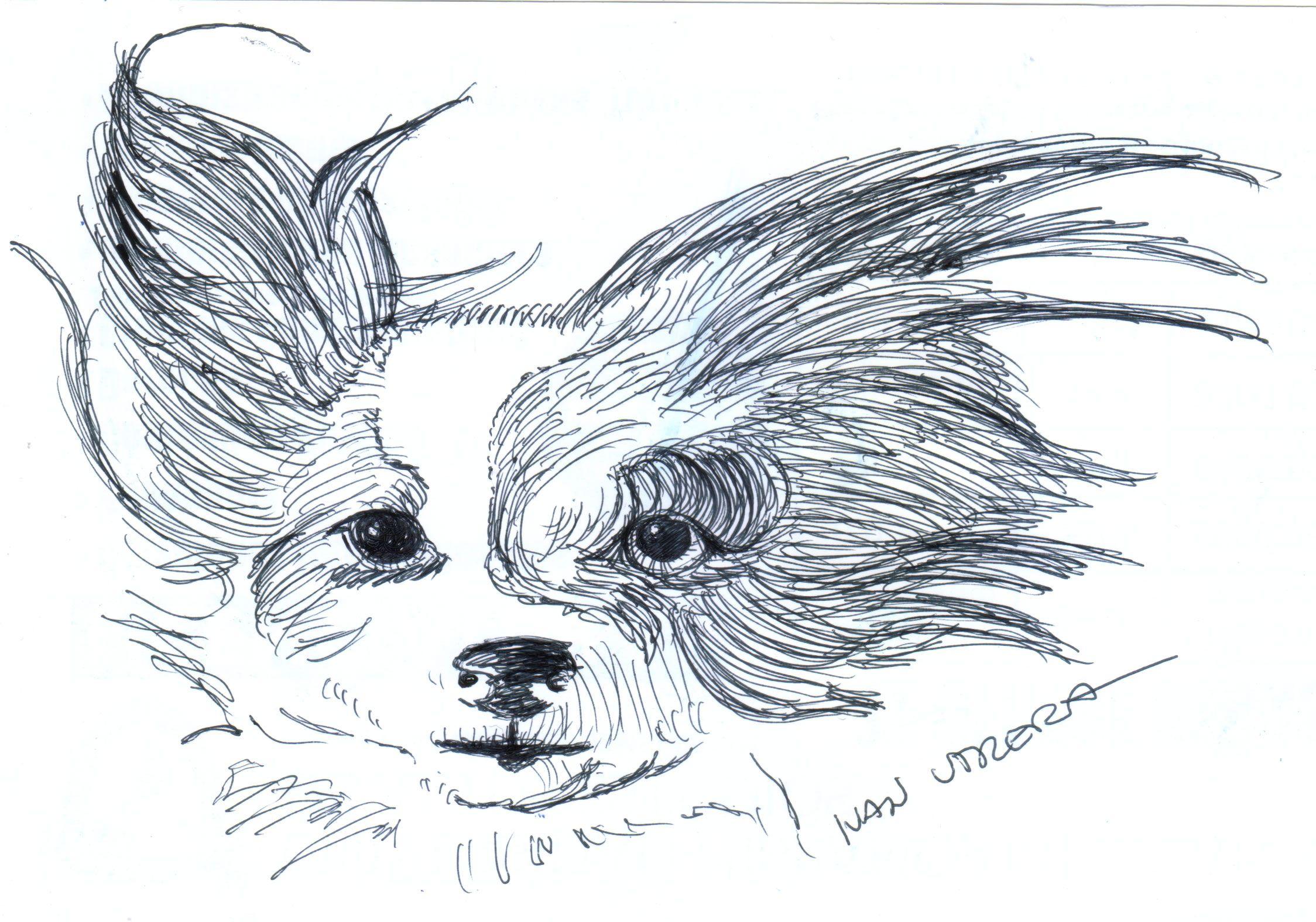 dibujo perro a lapicero