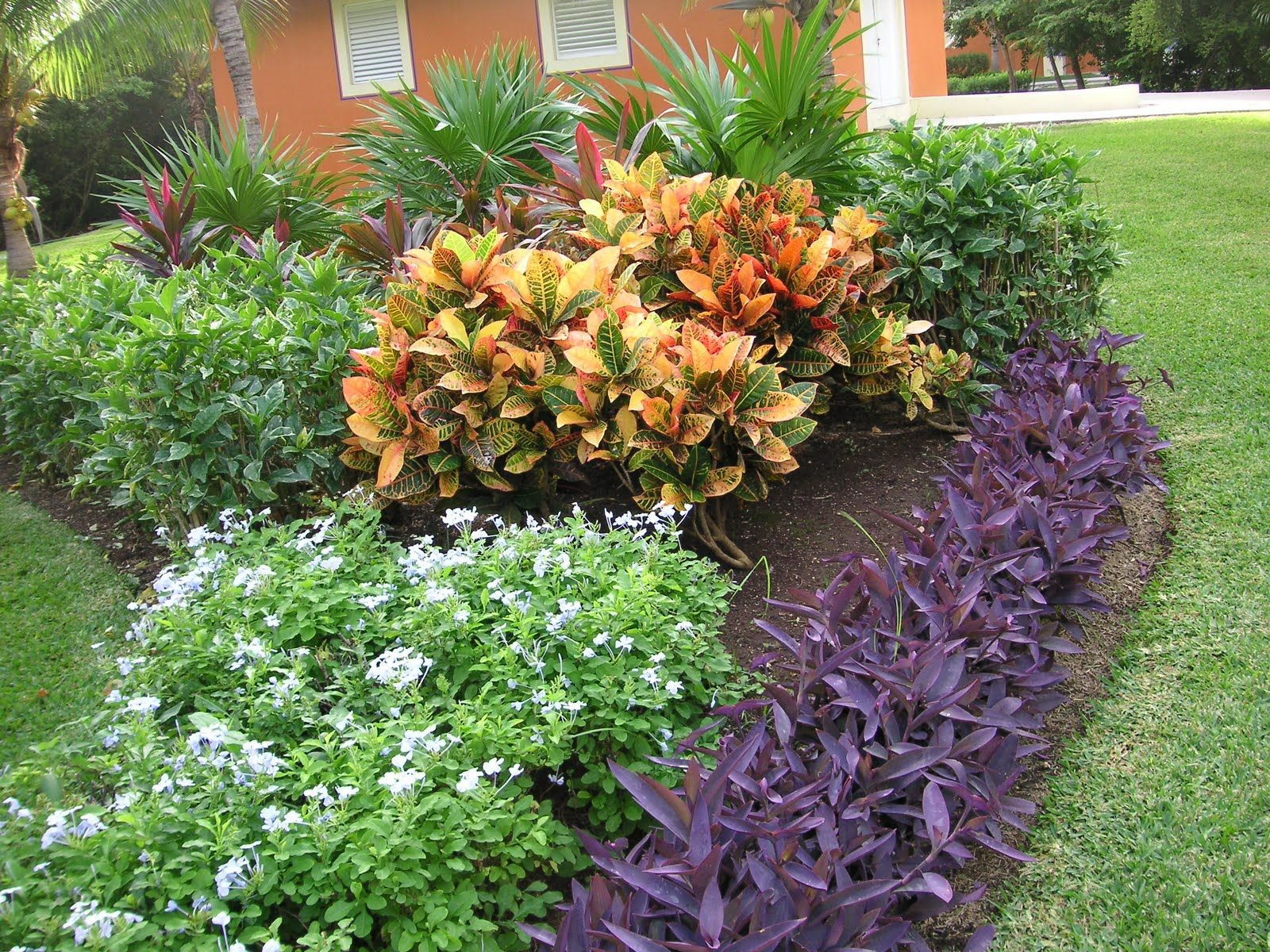 Flowers of the yucatan peninsula flowers gardens and yards for Plants for outdoor garden