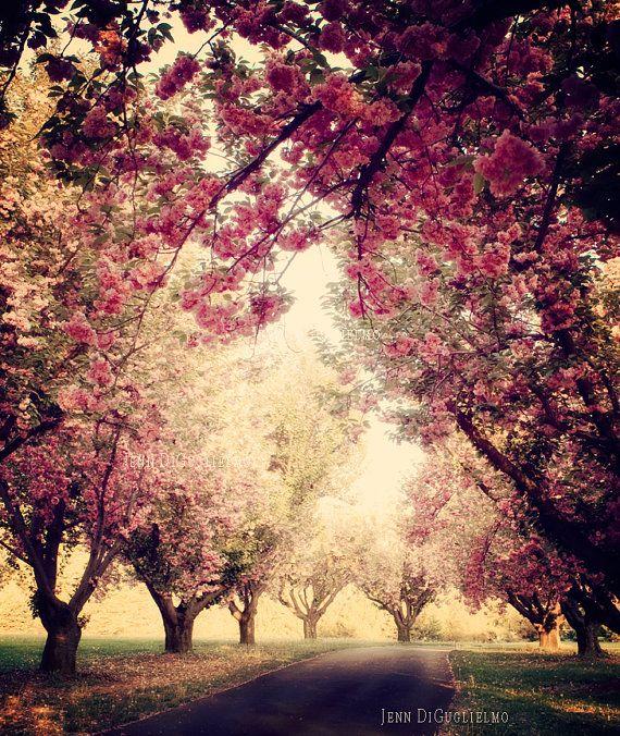 Cherry Blossom Tree Grove Fine Art Photography Door Jenndiguglielmo 28 00 Bloemenboom Boom Fotografie Natuur