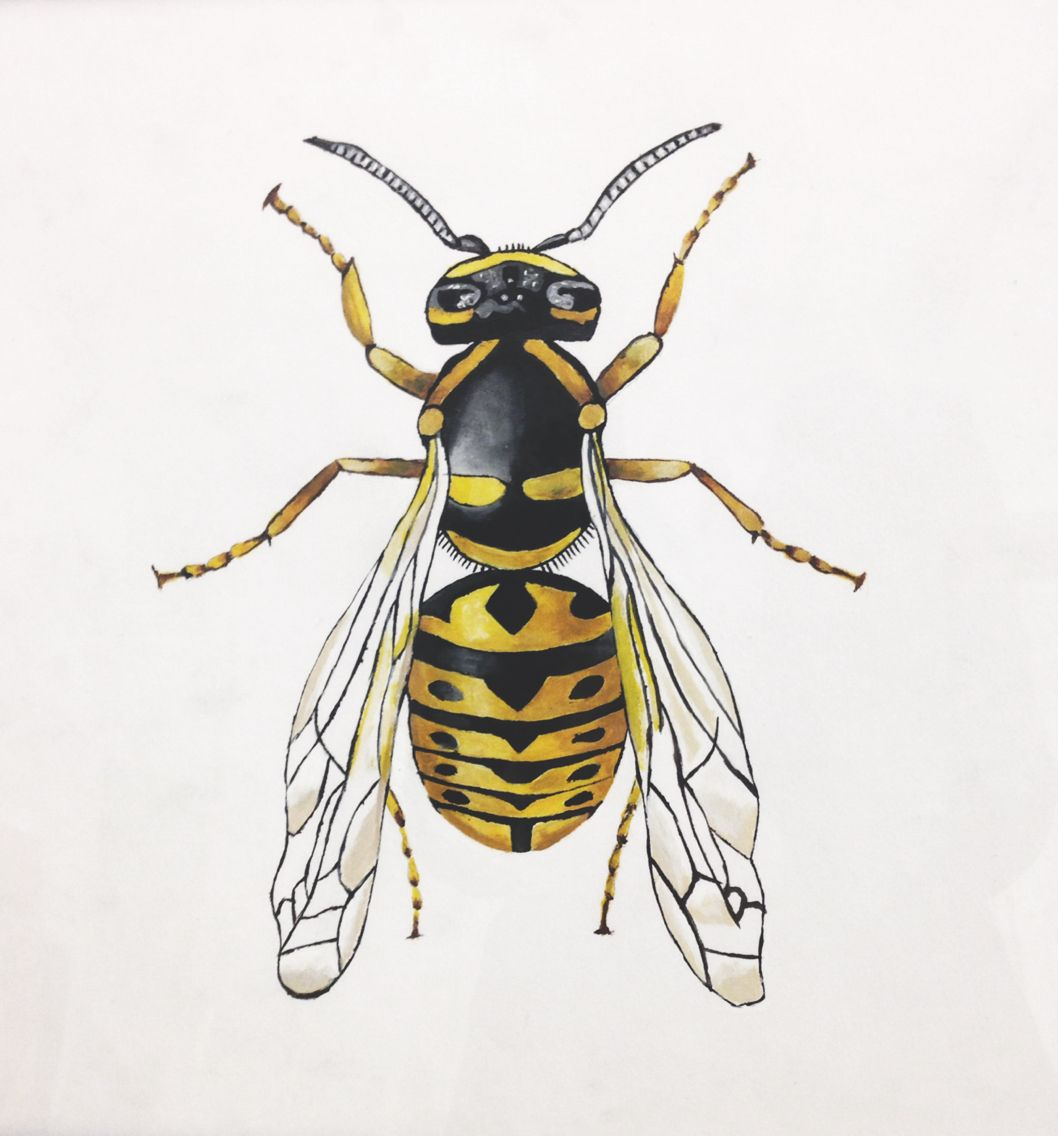 Yellow Jacket Wasp Painting Acrylic Beautifully Created With A