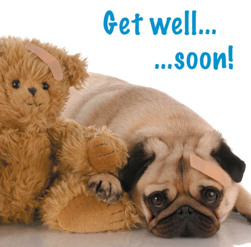 Details About Get Well Card Pug Dog Teddy Bear With Plaster