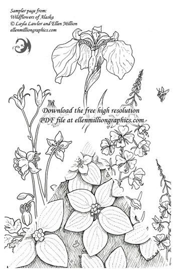 A Free Coloring Sampler Page From Wildflowers Of Alaska By Ellen Million And Layla Lawlor