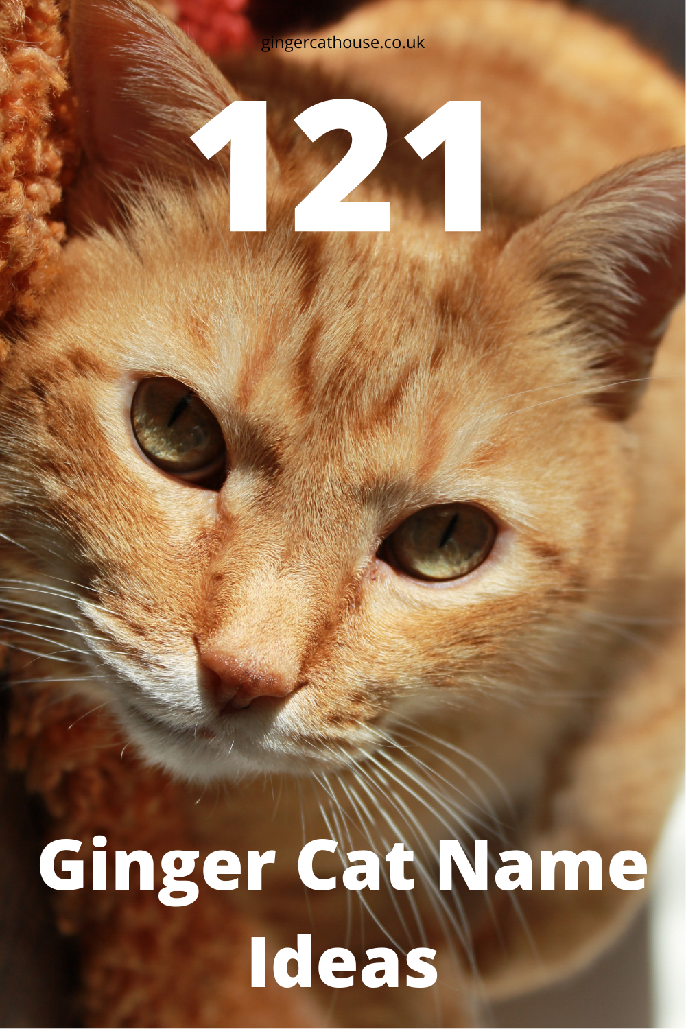 121 Ginger Cat Names The Best names for Orange Cats in