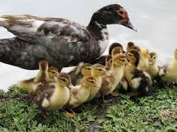 mama con sus crias