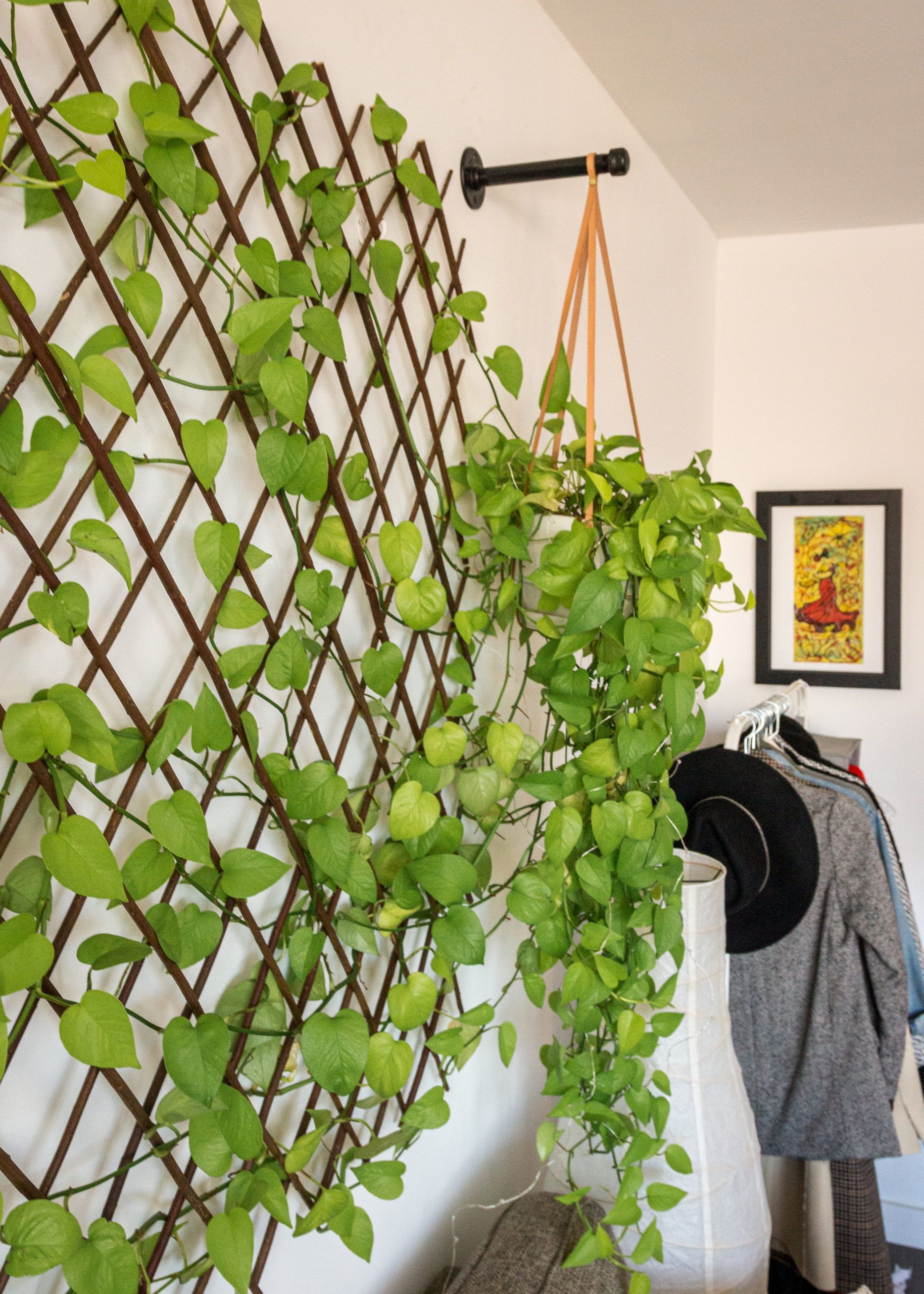 DIY PLANT WALL FOR UNDER 100