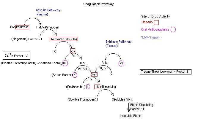 heparin mechanism of action