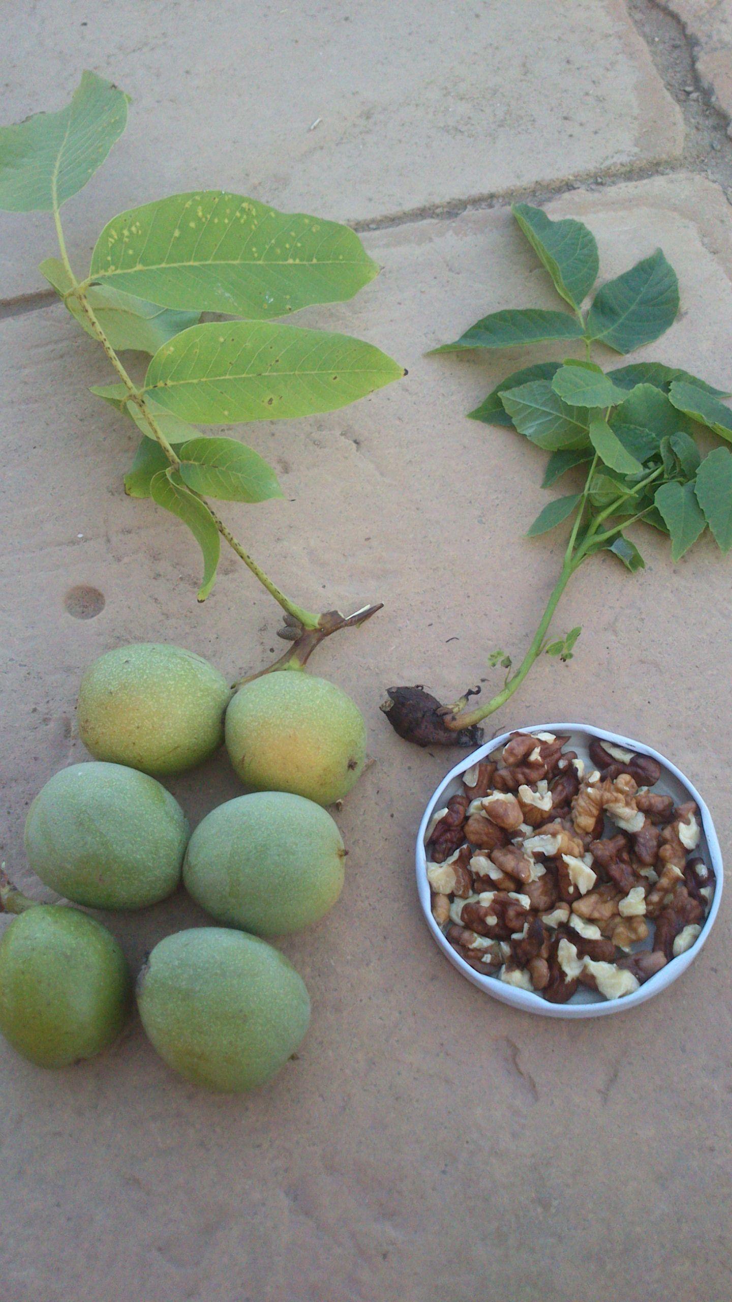 Planta frutos con c scara y nueces en trozos para consumir hortalizas verduras frutas - Cascara nueces para decorar ...