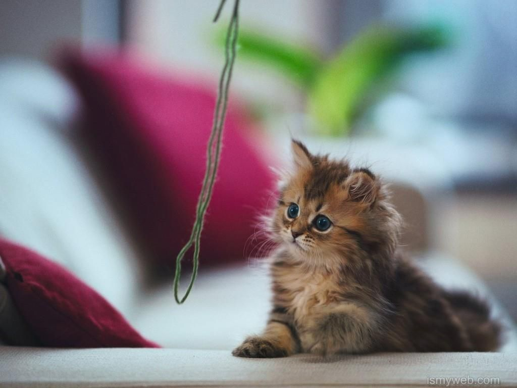 Cute adorable kitten stayed Wallpaper Download 7
