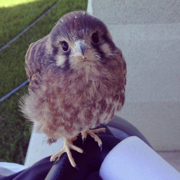 Baby Hawk   Wild animal kingdom, Animals wild, Animals