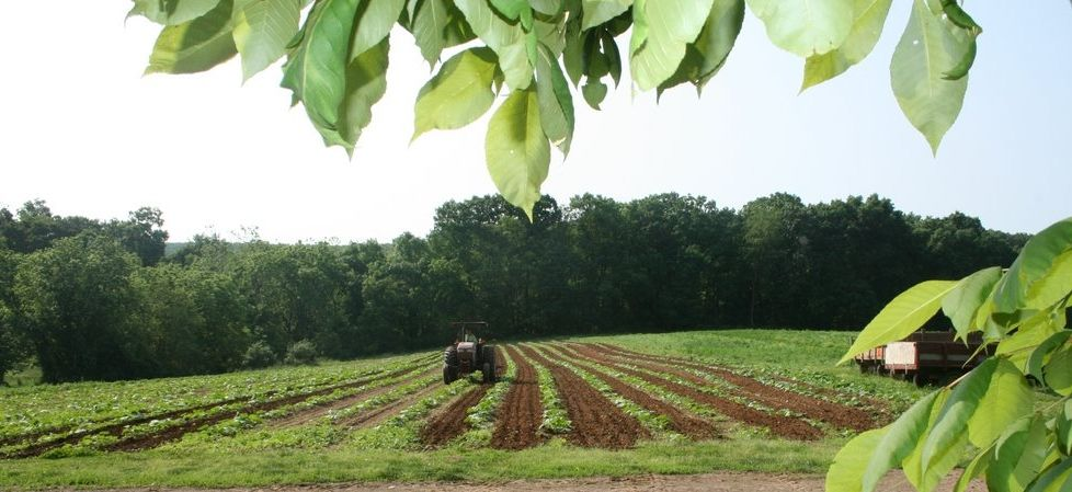 First fruits farm a christian ministry of growing fresh