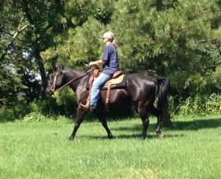 This awesome Quarter Horse is ready to help work the cattle. See her ad on Equine.com.