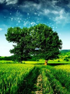 Download Green Field Way Mobile Wallpaper Mobile Wallpapers Landscape Photography Trees Landscape Scenery Macro Photography Nature