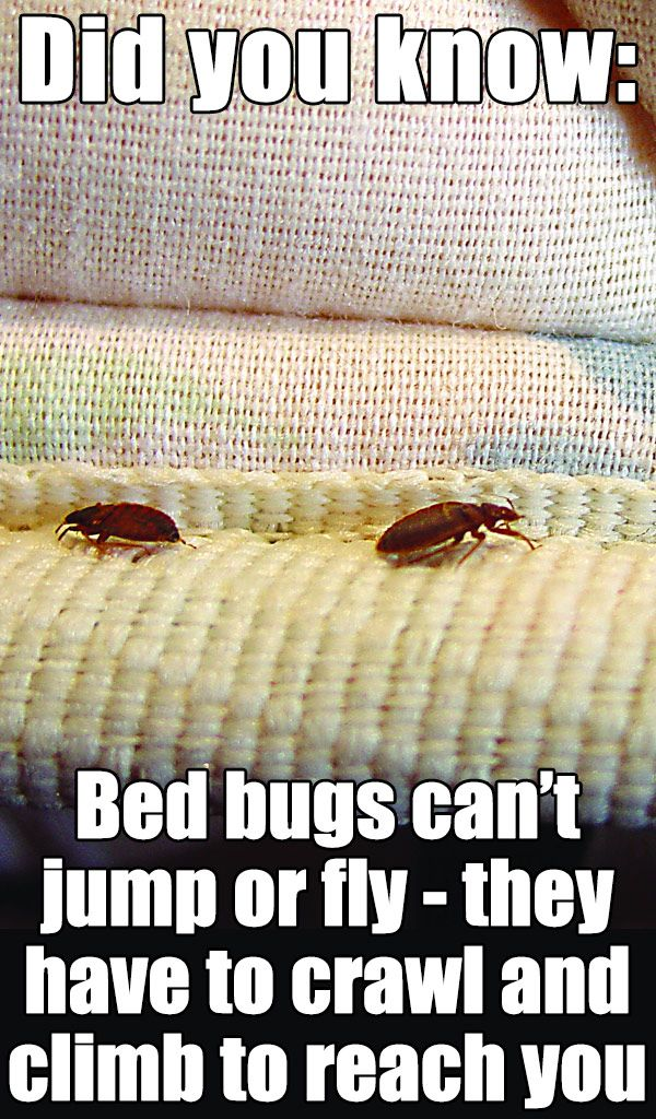 Pin On Bedbugs