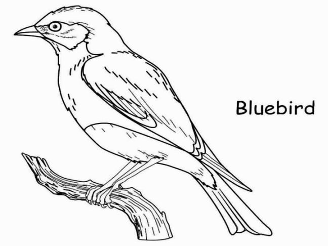 Blue Bird Coloring Page | Coloring Pages | Pinterest
