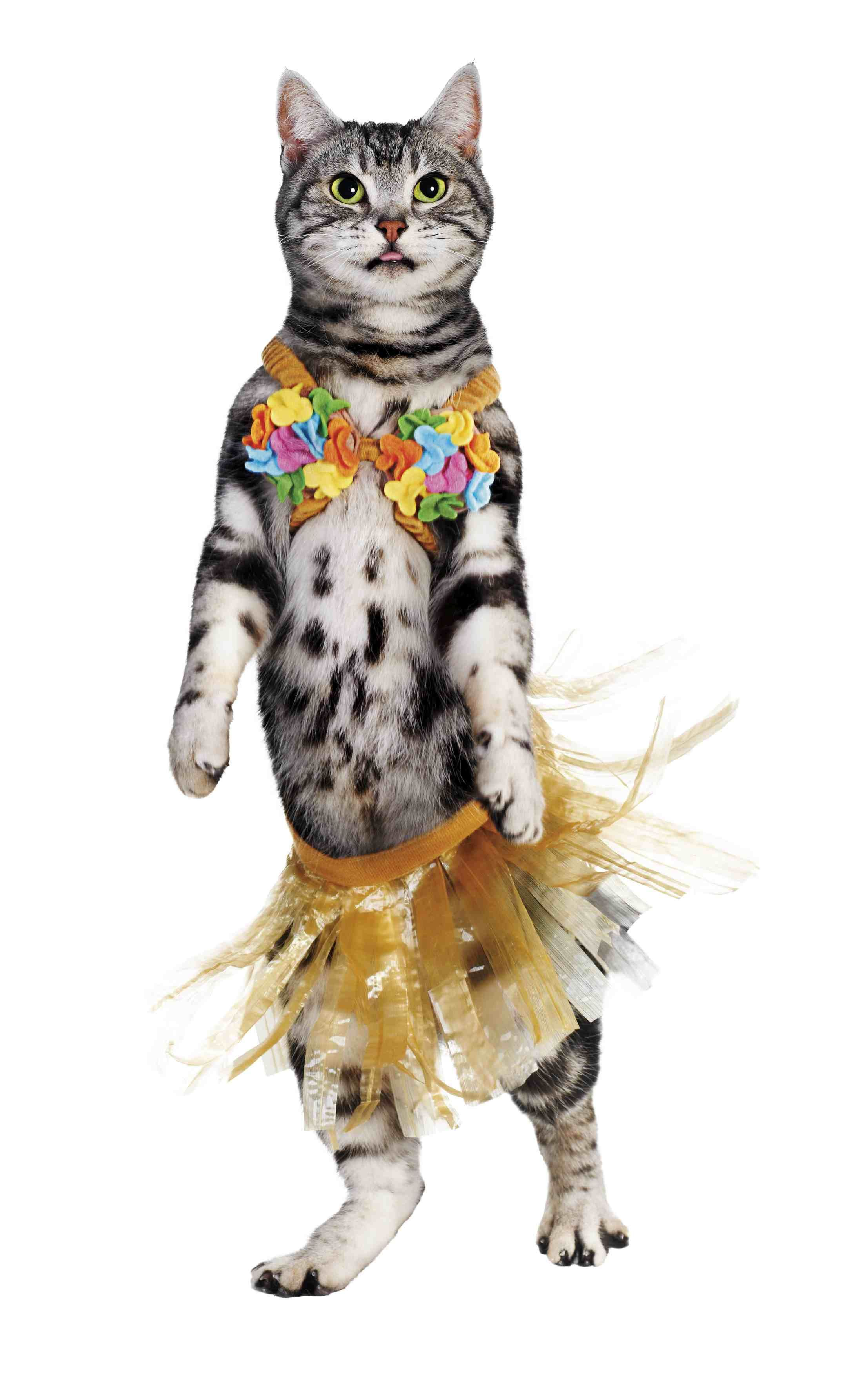 hula cat, one of petco's top 10 halloween costumes for pets. | pets