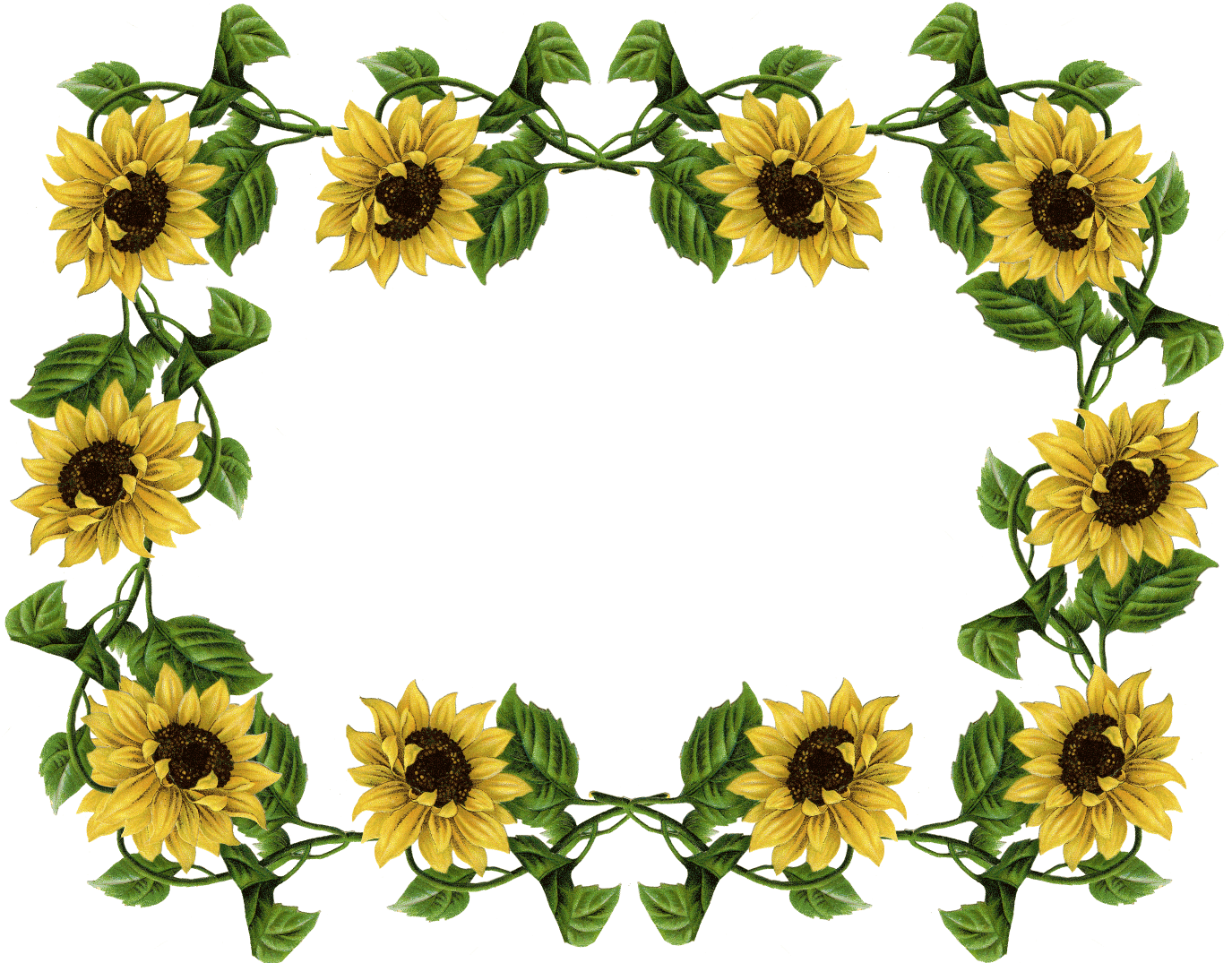sunflower pics frame sunflowers pinterest borders free rh pinterest com Single Sunflower Clip Art Borders Sunflower Clip Art Borders & Dried Corn