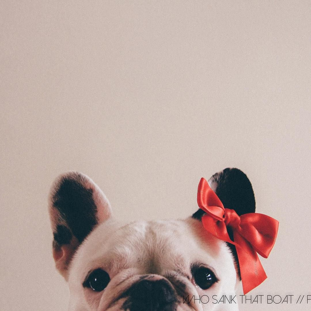 Whosankthatboat On Instagram Puppy Love Photography I Love