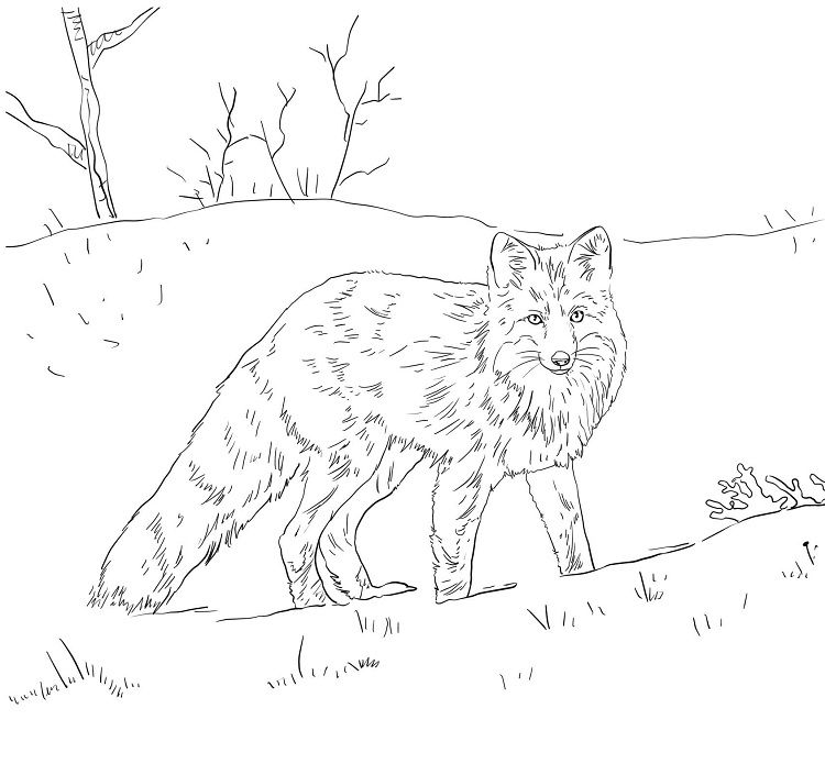 Pin By Cherlyn On Coloring Pages Ideas Fox Coloring Page Color