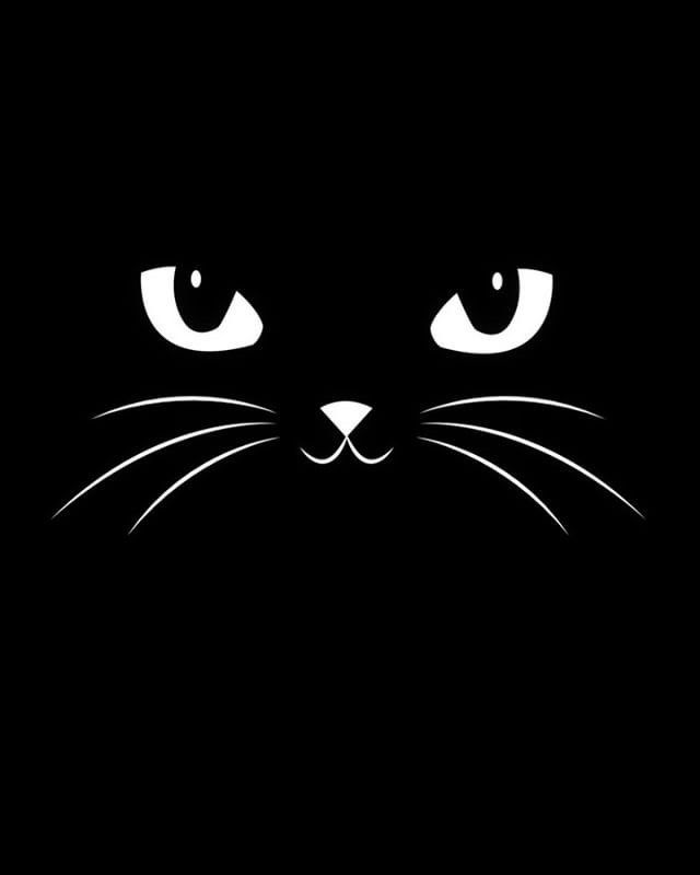 Cat Face Black Cat Art Cute Black Cats Cat Posters