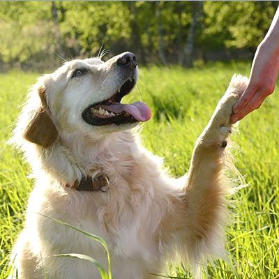 Do: Watch out for th  Do: Watch out for their paws: Health, safety, and behavioral running tips for logging miles with your four-legged fitness partner.    Health.com