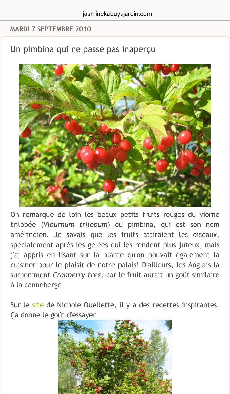 Pin By Petit Roger On Arbres Fruitiers Et Noix Plants Foraging