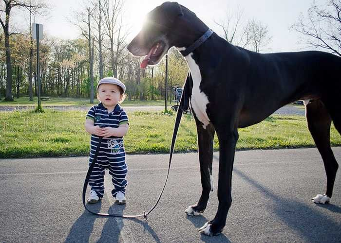 28 Adorable Photos Kids and Dogs Friendship