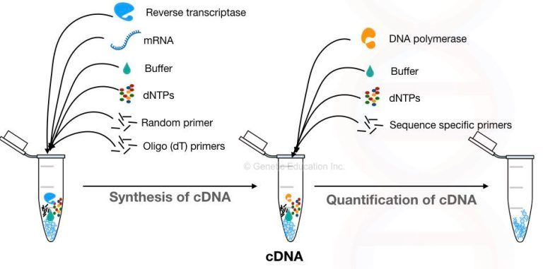 68a9b3ae24fdc83db830629f698c7839 - Real Time Pcr Principle And Application